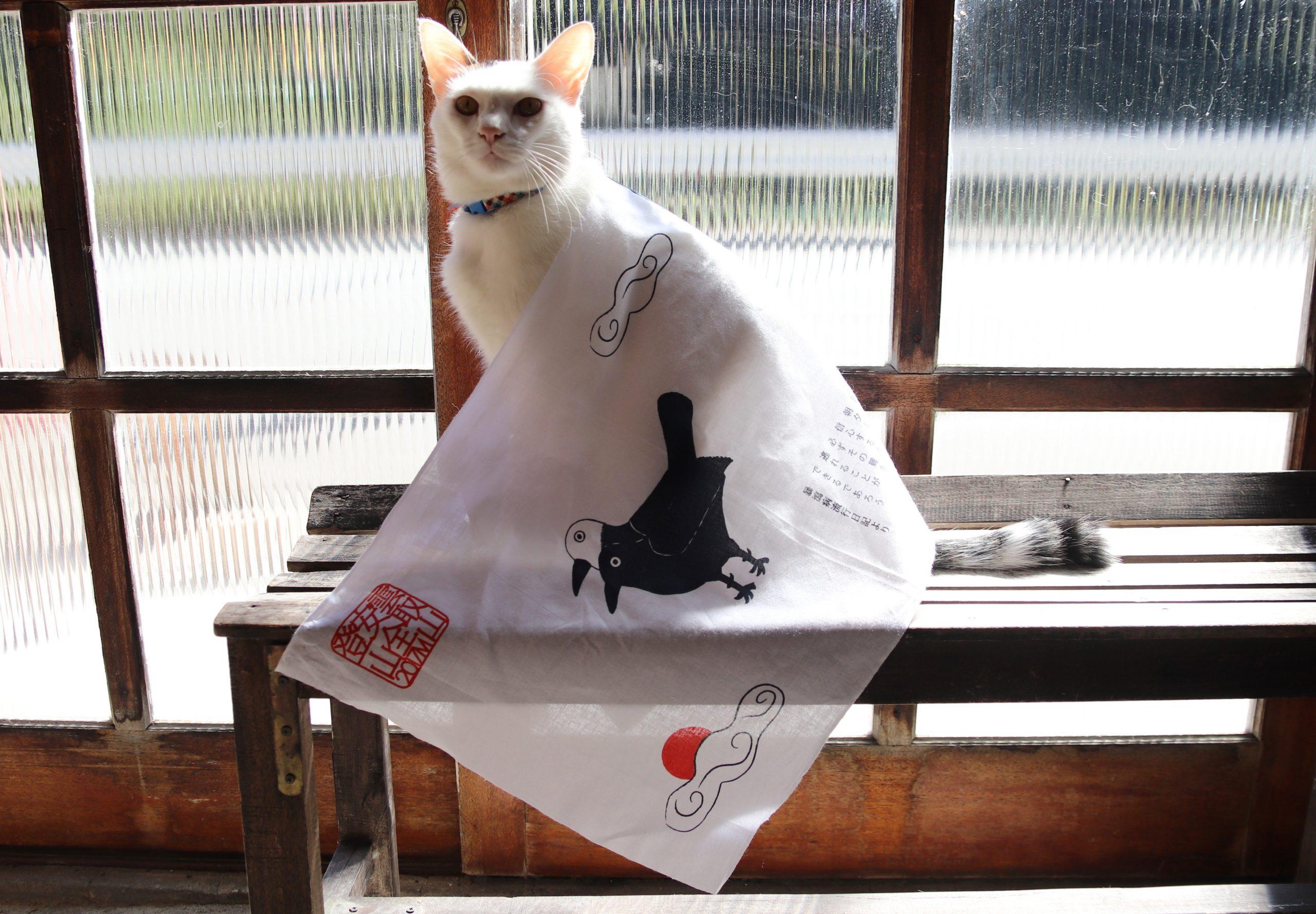 ヨゲンノトリタオルを羽織った猫