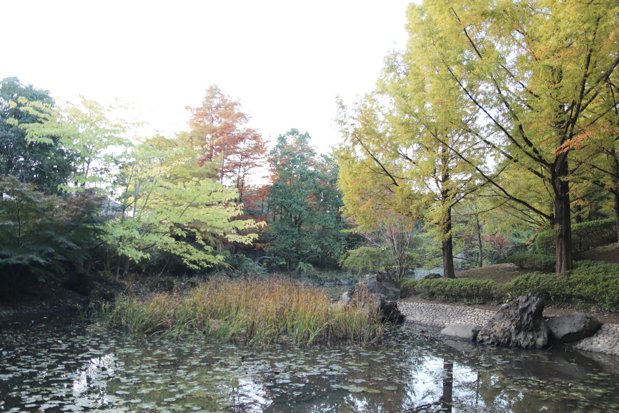 瑞穂ビューパーク・ジュンサイの池公園