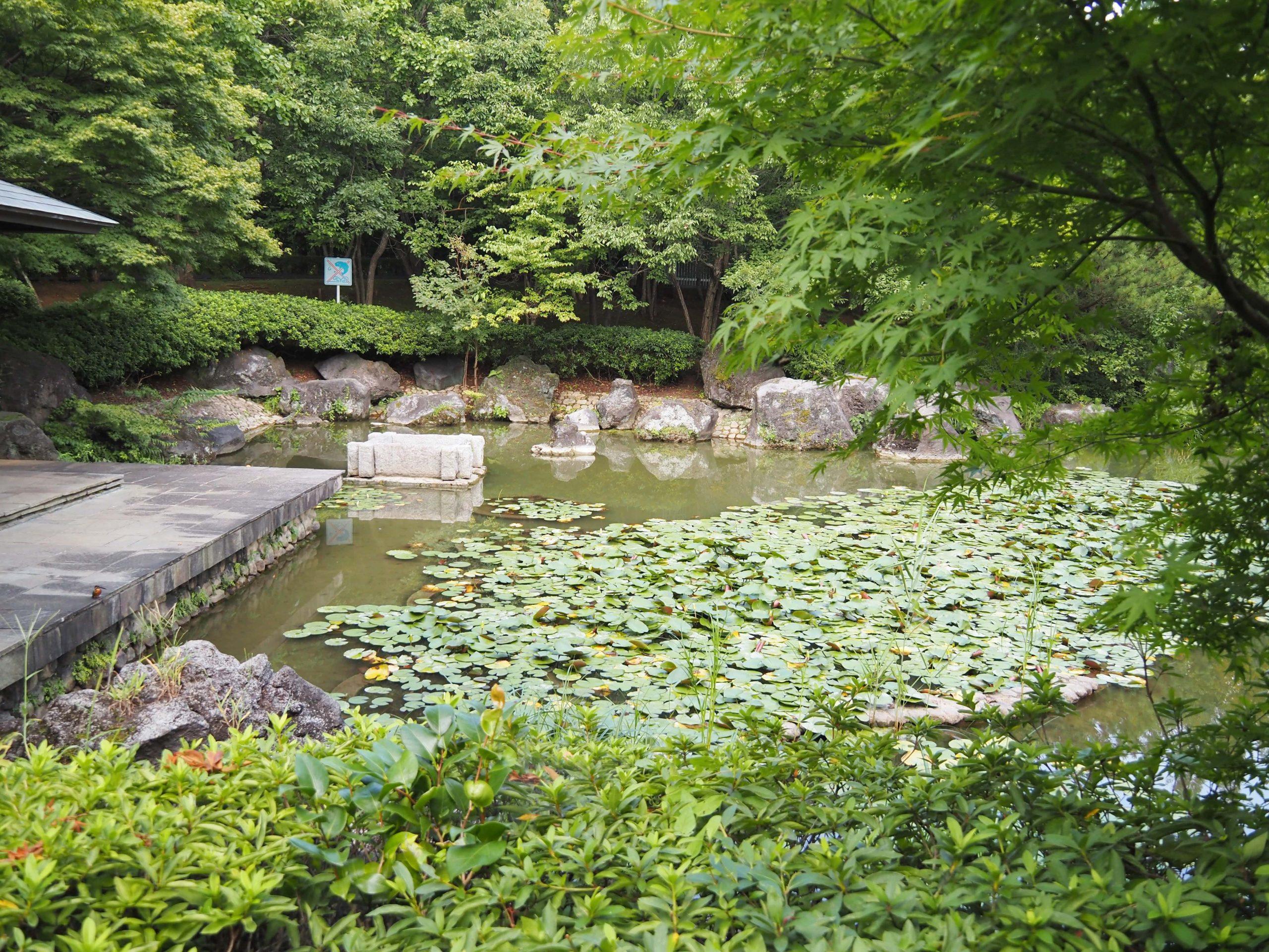 ジュンサイ池公園に入るカワセミ