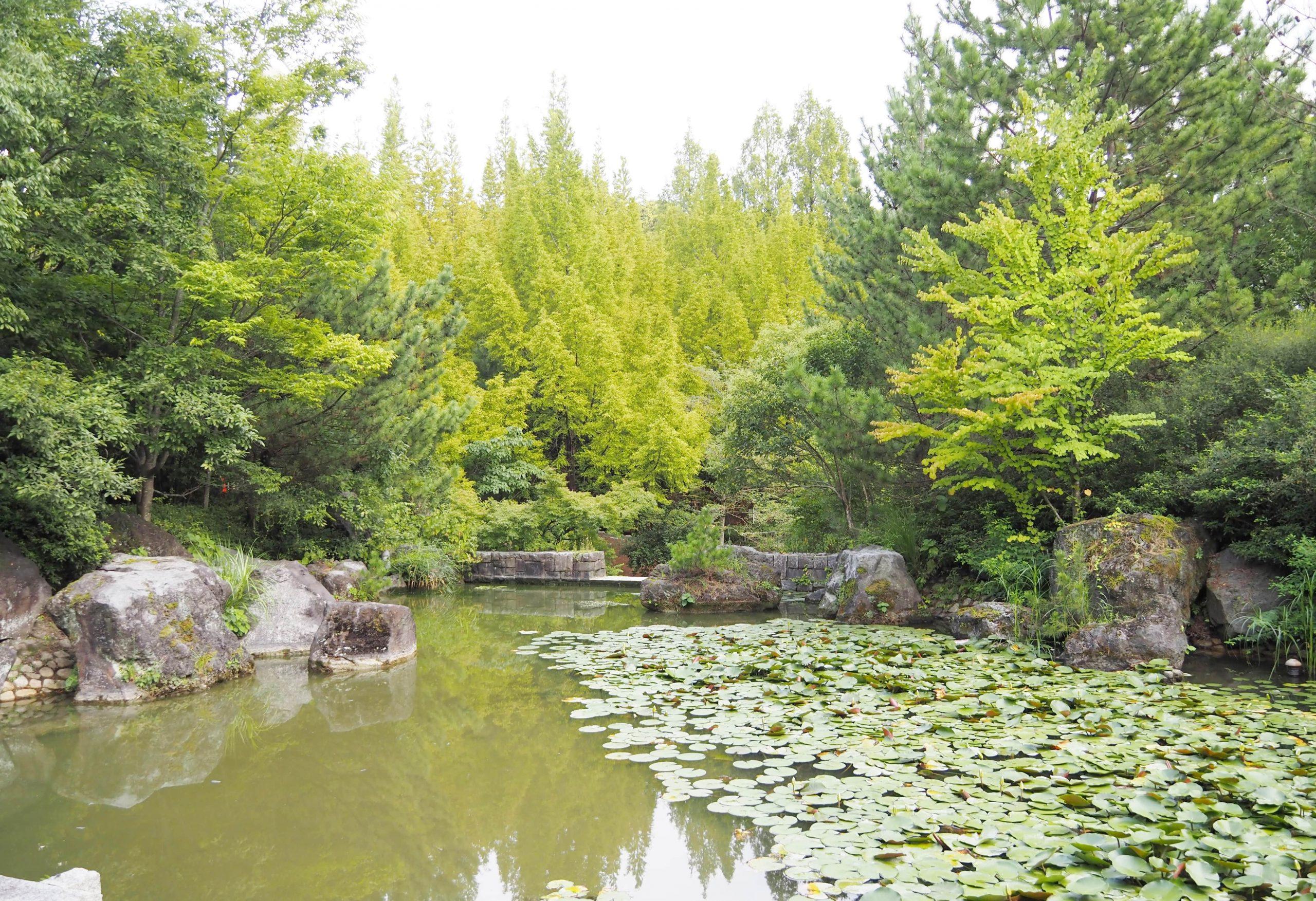 ジュンサイの池公園に入るカワセミ